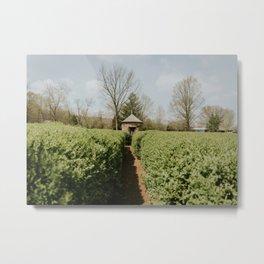 Hedge Maze Labyrinth - New Harmony, Indiana Metal Print