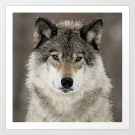 Winter Wolf Kunstdrucke