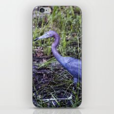 Little Blue Heron Strut iPhone & iPod Skin