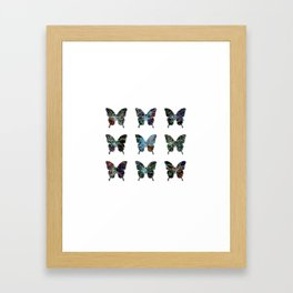 Butterfly collection usa o4 Framed Art Print