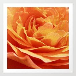 orange rose petals IX Art Print