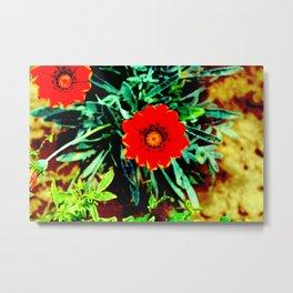Gazania Flower Metal Print