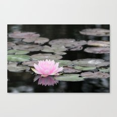 The Lily Pad Canvas Print