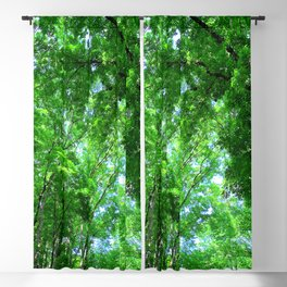 Bilar Man-Made Forest Bohol, Philippines Blackout Curtain
