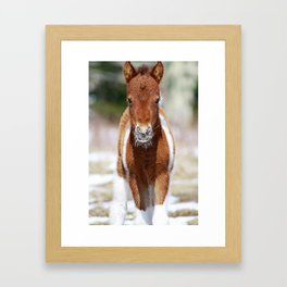 The Newbie and His Whiskers - A Foal at Grayson Highlands Framed Art Print