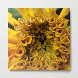 Marigold Metal Print
