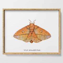 Spiny Oakworm Moth (Anisota stigma) Serving Tray