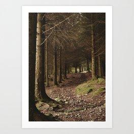 Path through forest near Blea Tarn. Cumbria, UK. Art Print