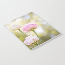Rose Bokeh Notebook