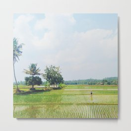 rice pattie fields Metal Print