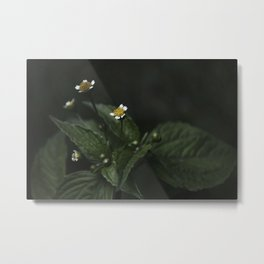 Botanical Still Life Chamomile Metal Print