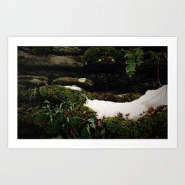 Snow & Moss Art Print