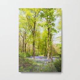 Bluebell Woods In Spring Metal Print