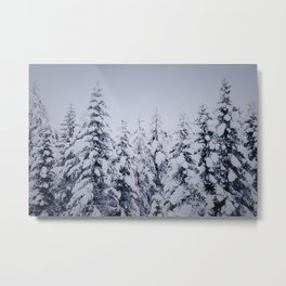 Forest in the winter Metal Print