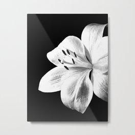 White Lily Black Background Metal Print