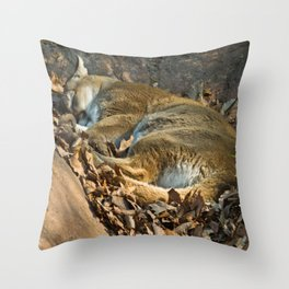 Sleeping Mountain Lion Throw Pillow