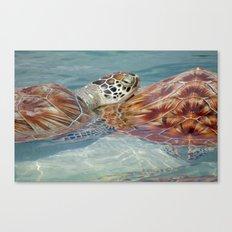 TurtleyTwins Canvas Print