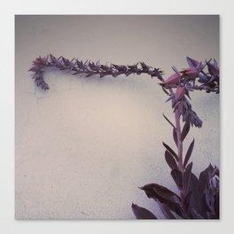 Echeveria Afterglow #2 - 2014 Canvas Print