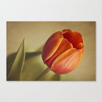 tulip Canvas Prints featuring Tulip by Lawson Images