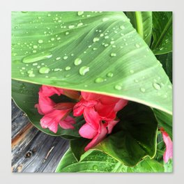 Exotic Morning Dew Canvas Print