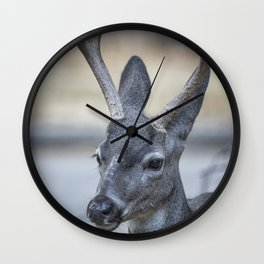 Buck with Two Pronged Antlers Wall Clock
