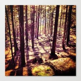 Western Woods Canvas Print