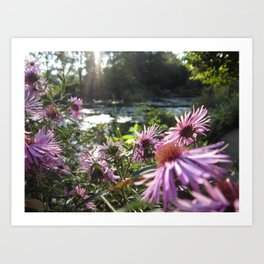 Rays on Monet's Garden Art Print