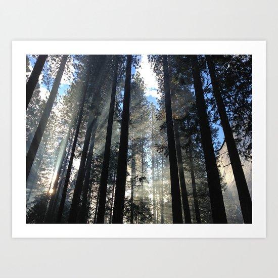 Sunlight Shines Through the Trees Art Print