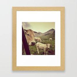 Kýr Framed Art Print