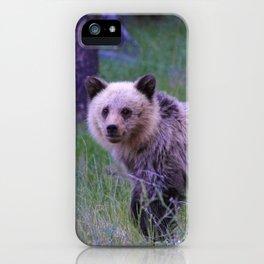 Grizzly bear cub in Jasper National Park | Alberta iPhone Case