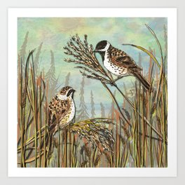 Reed Buntings Art Print
