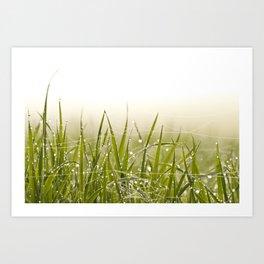 Morning dew on grass field in spring Art Print