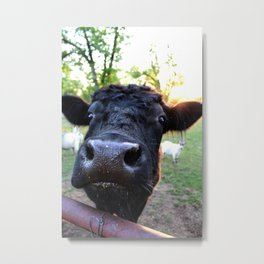 Cow No. 2 Metal Print