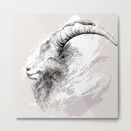 Mountain goat Ram portrait head Metal Print
