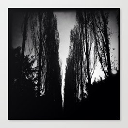 Poplars Silhouetted Canvas Print