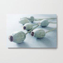 Poppy seed capsule Metal Print