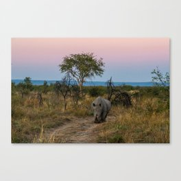 A Rhinoceros and a Sunrise in South Africa Canvas Print