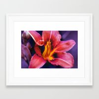 lily Framed Art Prints featuring  Lily. by Mary Berg