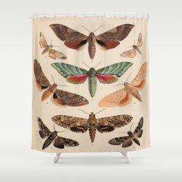 Vintage Natural History Moths Shower Curtain