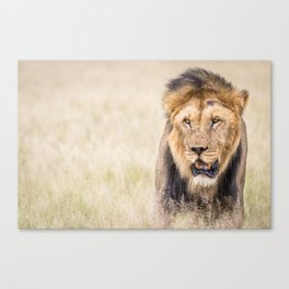 Male Lion starring Canvas Print