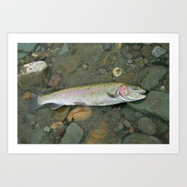 Rainbow trout at rest Art Print
