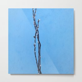 Pussywillows against Sky Metal Print