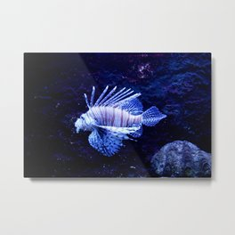 Sea World Lion Fish Metal Print