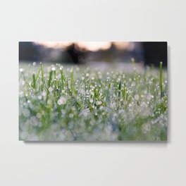 Dew Laden Grass 2 Metal Print