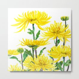 Yellow Chrysanthemums Metal Print