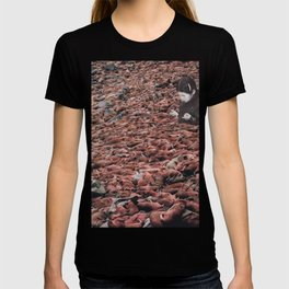 Counting Walrus T-shirt