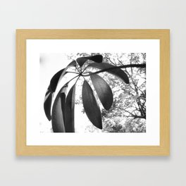 Curvacious Visions Framed Art Print