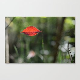 Red Leaf Caught Canvas Print