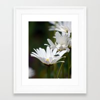 daisies Framed Art Prints featuring Daisies by Lynn Bolt