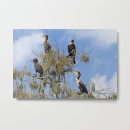 Cormoran Tree Metal Print